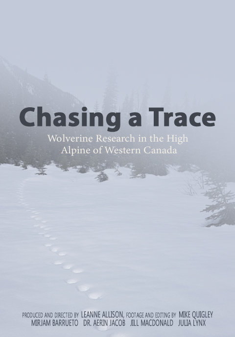 Chasing a Trace