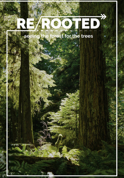 Re-Rooted: Seeing the Forest for the Trees