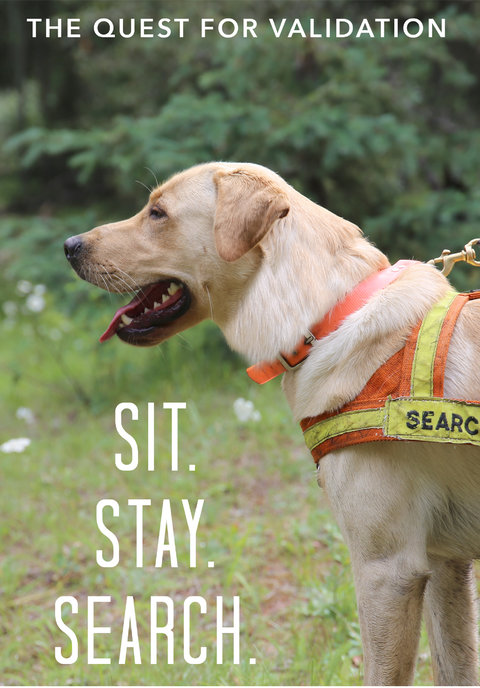Sit. Stay. Search.