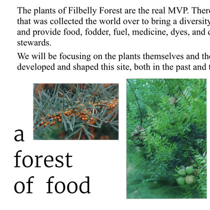 The plants and animals of Filbelly Forest are the real MVPs. Cultivated from around the world they show what's possible when working with nature instead of against it.