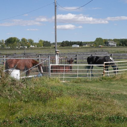 There are a couple of horses on the property that have been written into the script. They add a nice Alberta touch to the project.